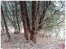 제천 슬로시티수산 측백나무숲길 체험