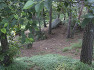 울창한 숲과 함께 하는 주말나들이, 부산 금강공원과 케이블카