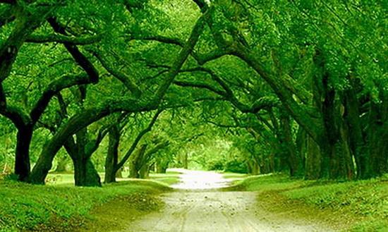 자연치유음악(Isotonic Sound)/Forest`s Poems