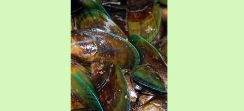 홍화씨가루, 녹색입홍합, 글루코사민, 콘드로이친 … 관절염에 좋다는데?