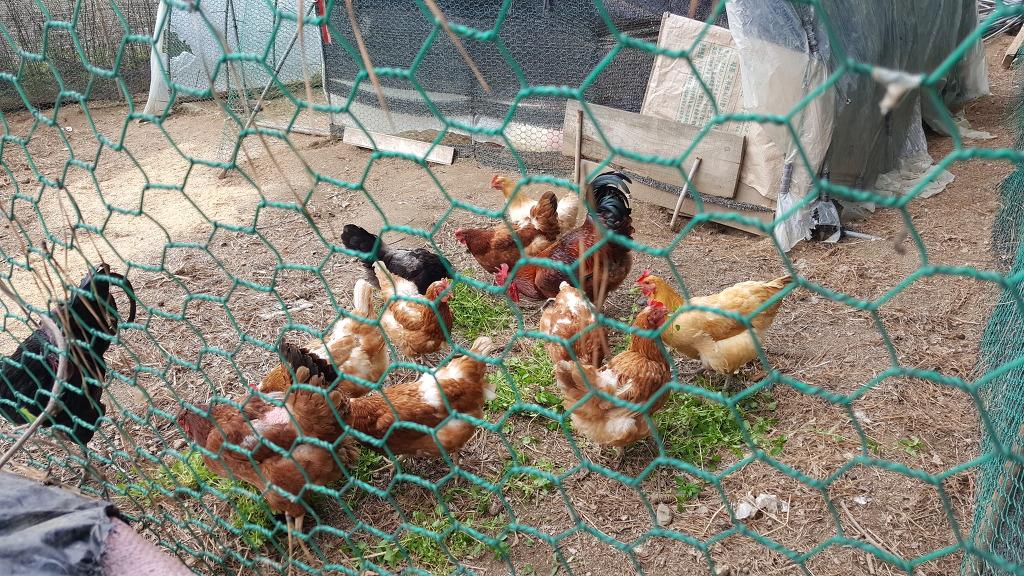 레드그린칼라푸드 화이트앤창말농원