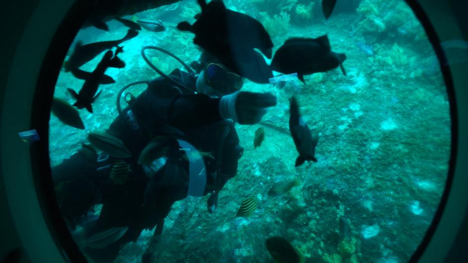 가족끼리 가기 좋은 제주도 서귀포 잠수함!